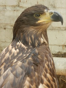 Наша птица 0431