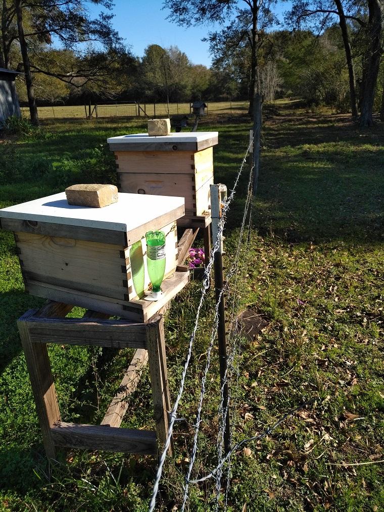 Дальний более сильный улей, там больше пчел и запасов у них больше было. Ближние лентяи, мало накопили за прошлое лето, приходится активно докармливать.