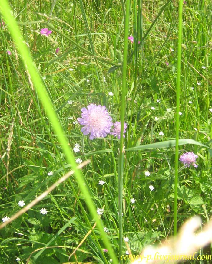 IMG_3359-цветок