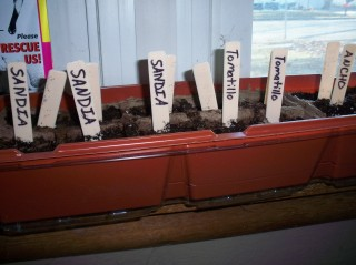 plants # 1