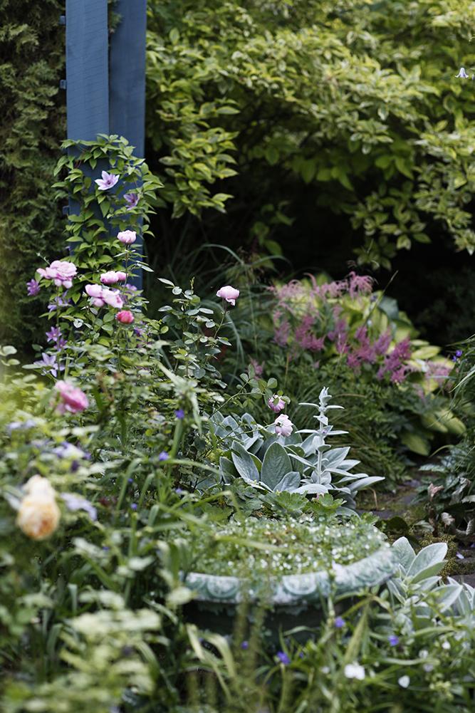 Сад в середине лета и струйный полив 1.jpg
