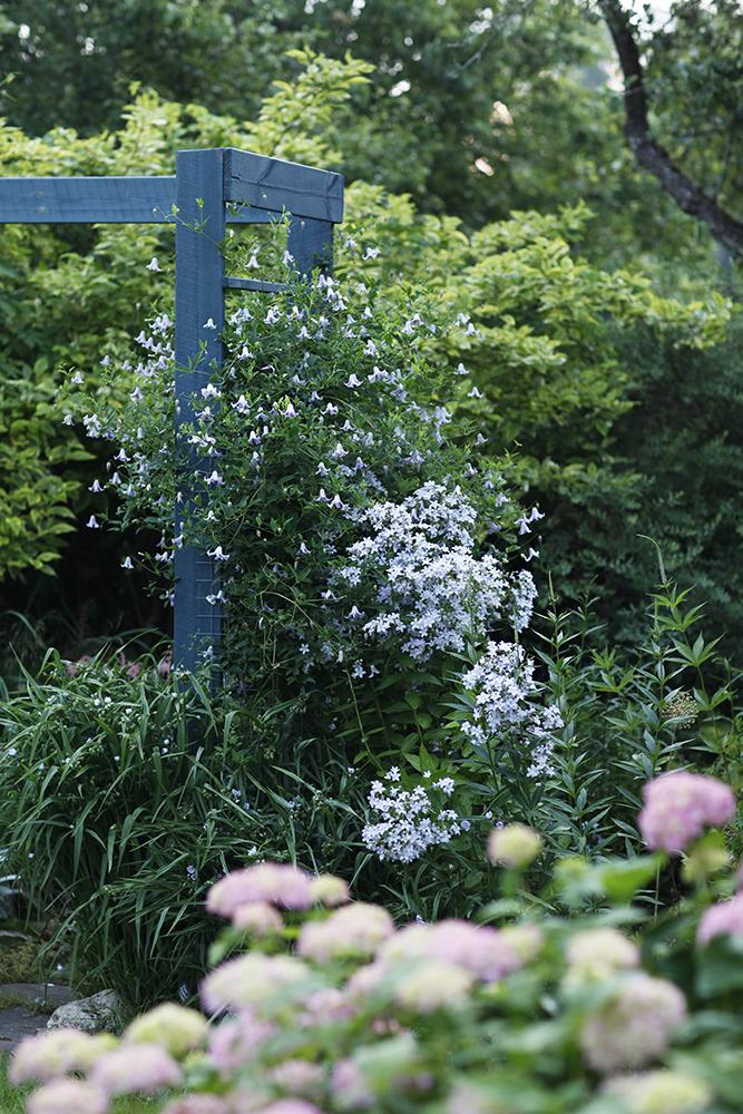 Сад в середине лета и струйный полив 2.jpg