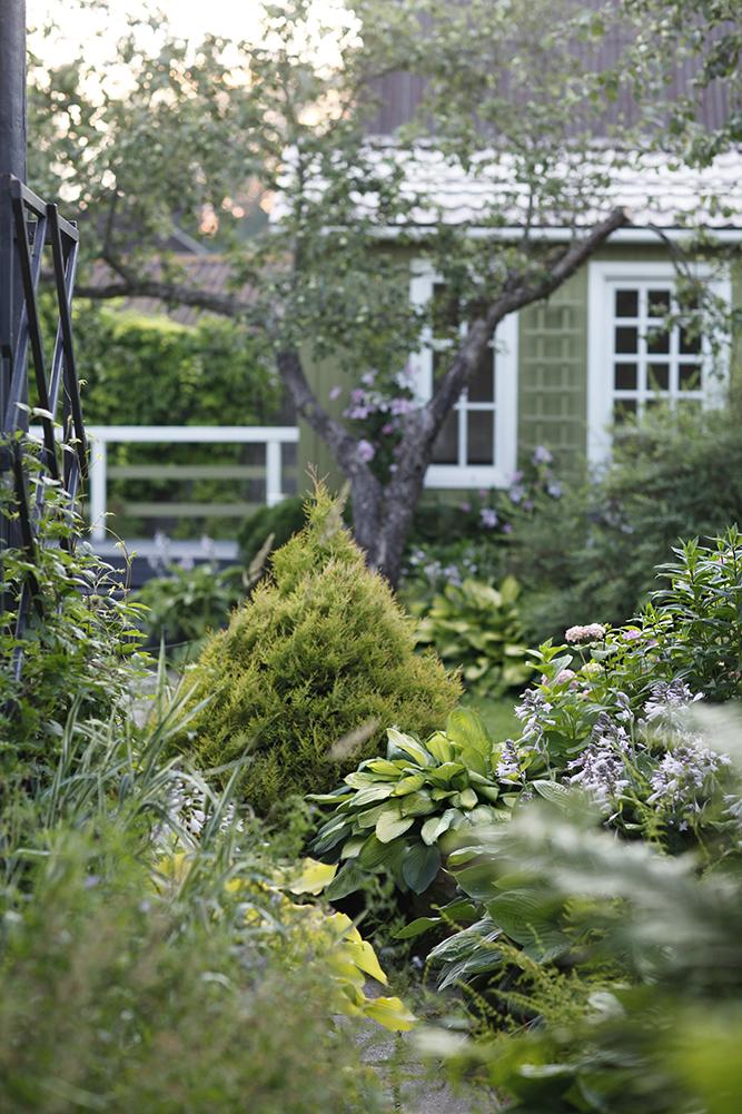 Сад в середине лета и струйный полив 3.jpg