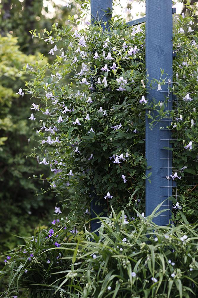 Сад в середине лета и струйный полив 4.jpg