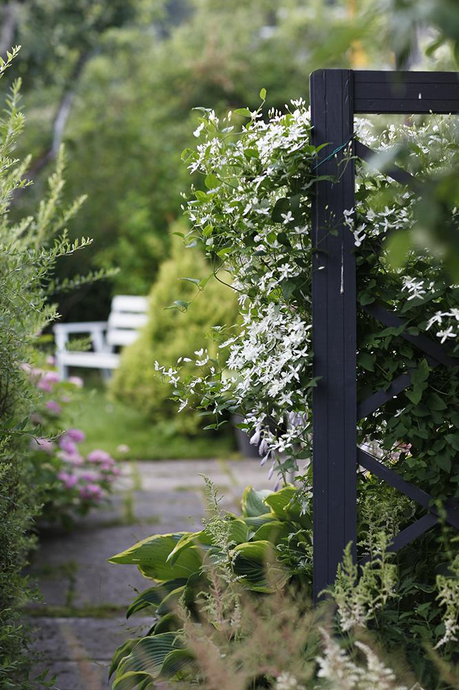 Сад в середине лета и струйный полив 6.jpg