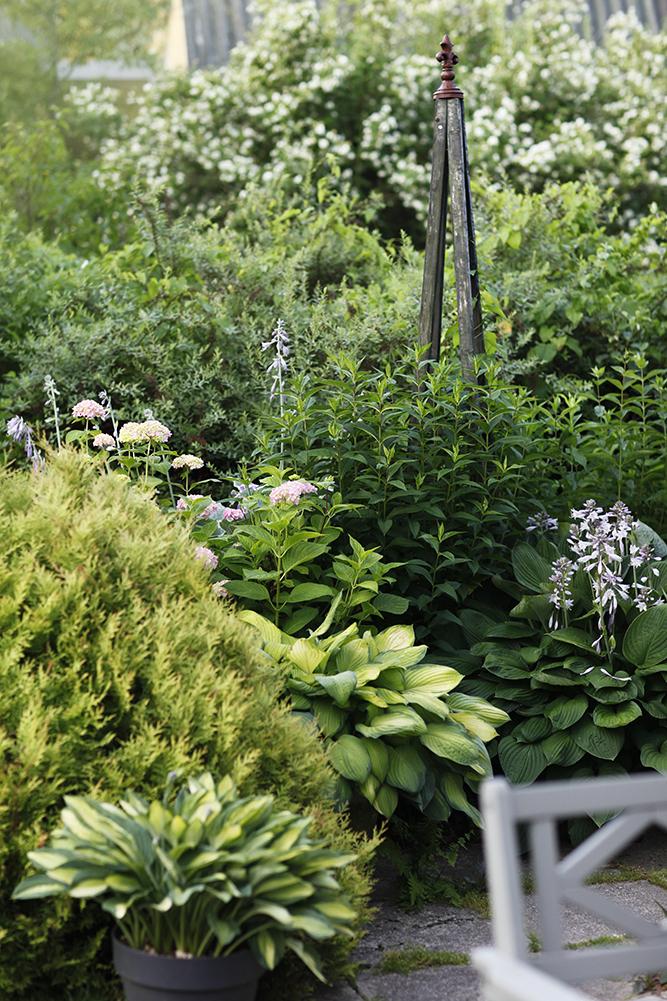 Сад в середине лета и струйный полив 8.jpg