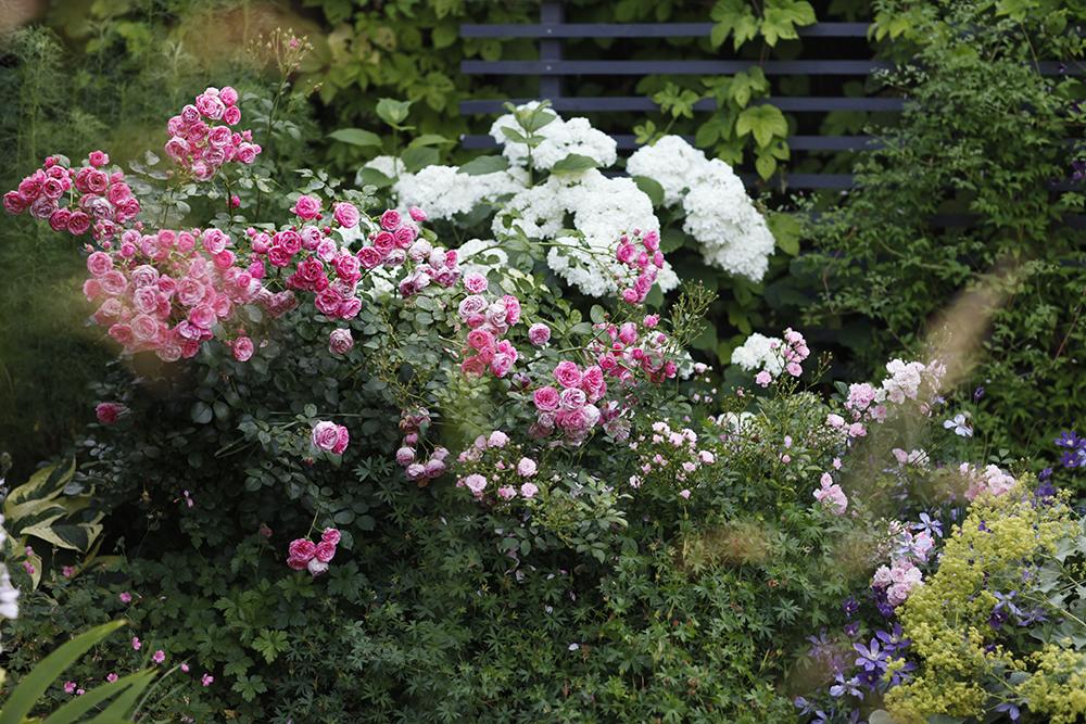 Сад в середине лета и струйный полив 9.jpg