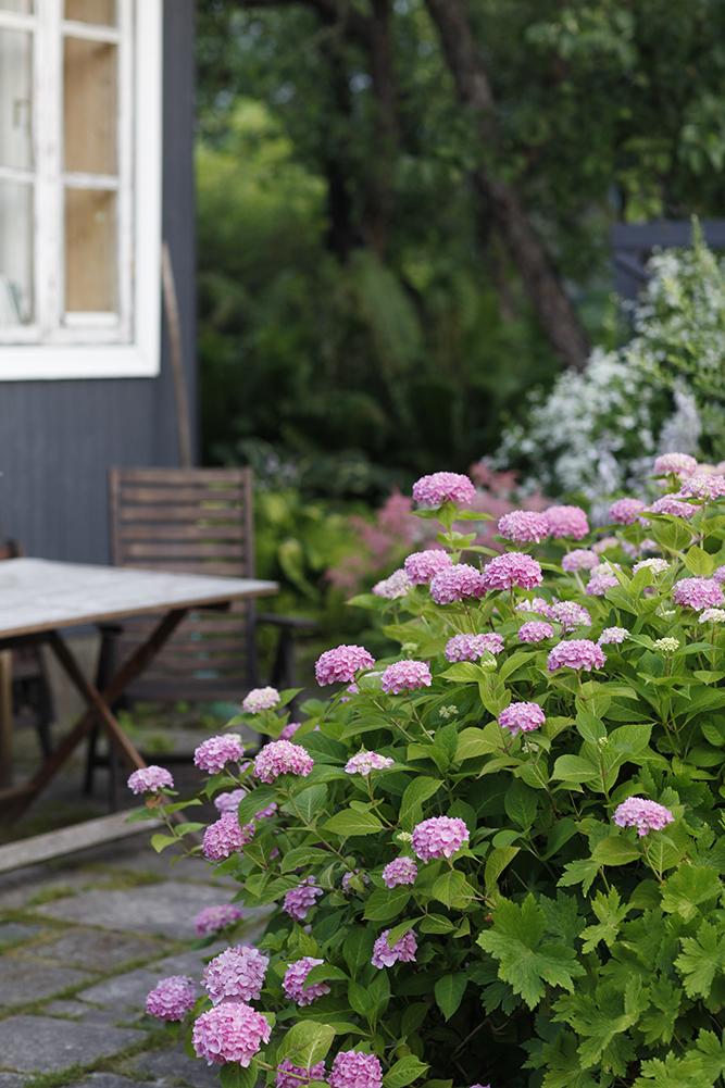 Сад в середине лета и струйный полив 10.jpg