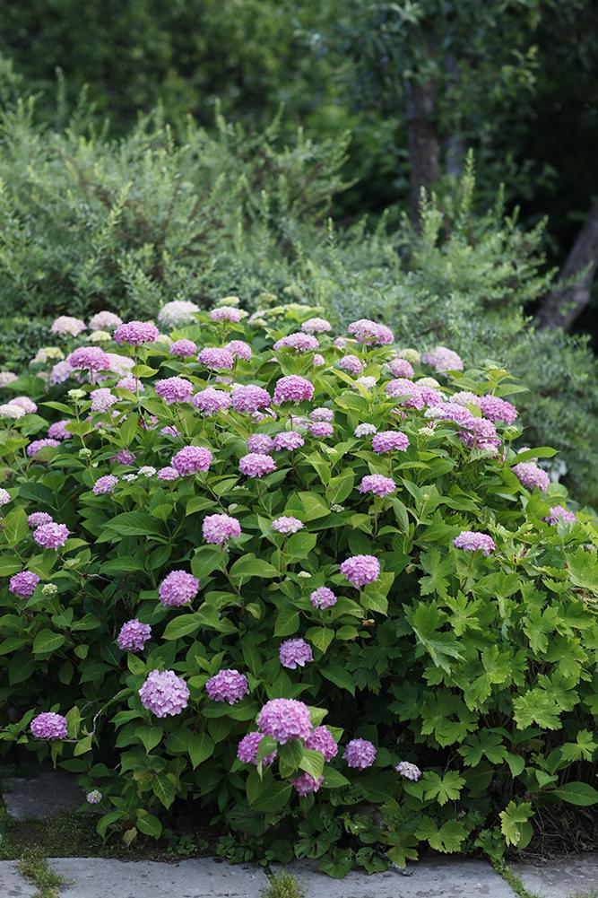 Сад в середине лета и струйный полив 11.jpg