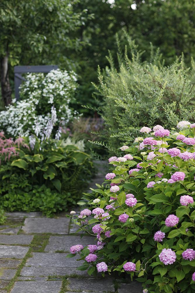 Сад в середине лета и струйный полив 12.jpg