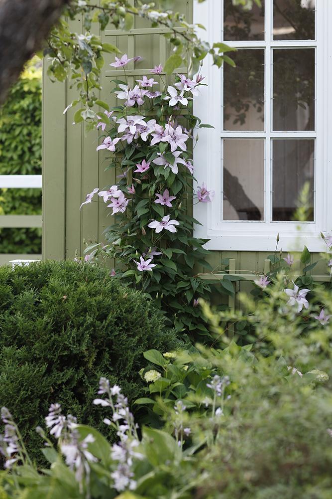 Сад в середине лета и струйный полив 14.jpg