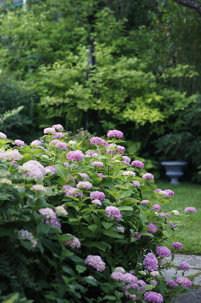 Сад в середине лета и струйный полив 15.jpg
