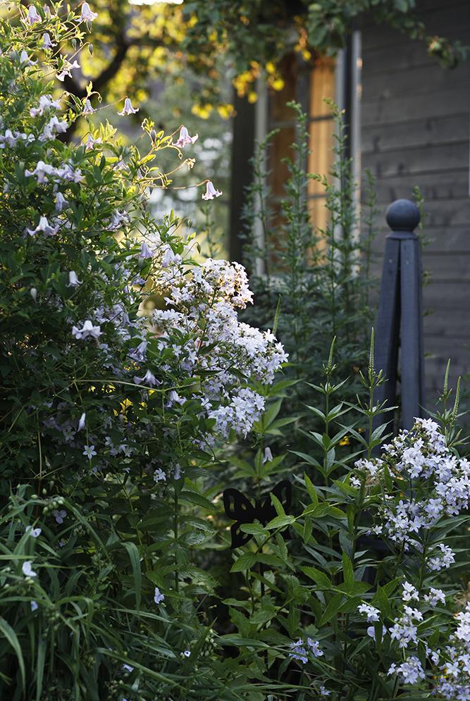 Сад в середине лета и струйный полив 16.jpg