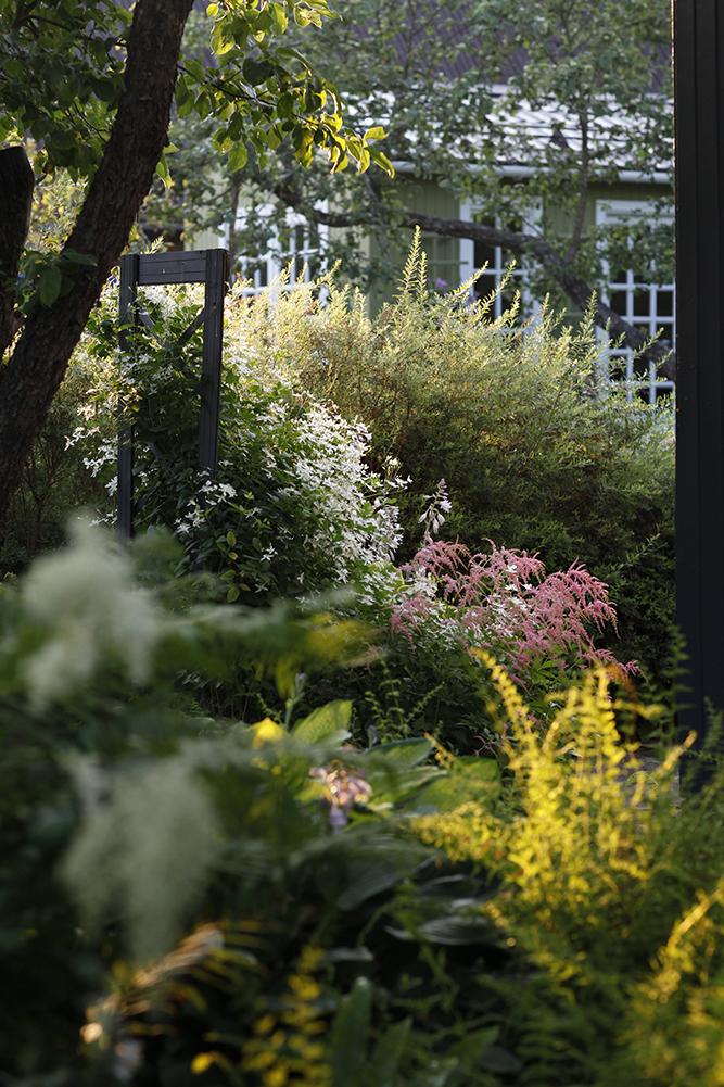 Сад в середине лета и струйный полив 17.jpg