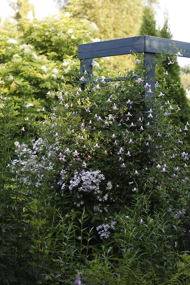 Сад в середине лета и струйный полив 18.jpg