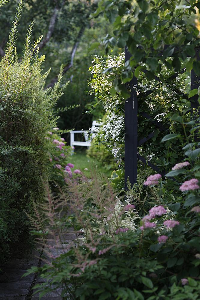 Сад в середине лета и струйный полив 21.jpg