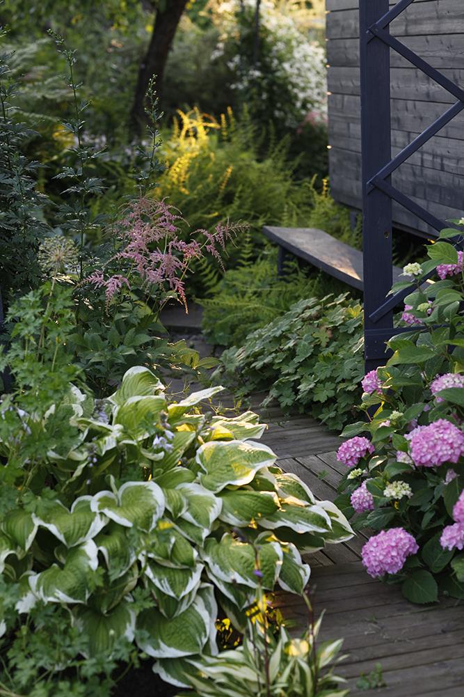 Сад в середине лета и струйный полив 22.jpg