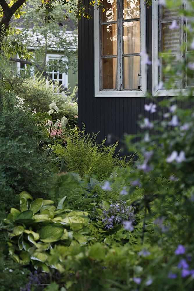 Сад в середине лета и струйный полив 23.jpg