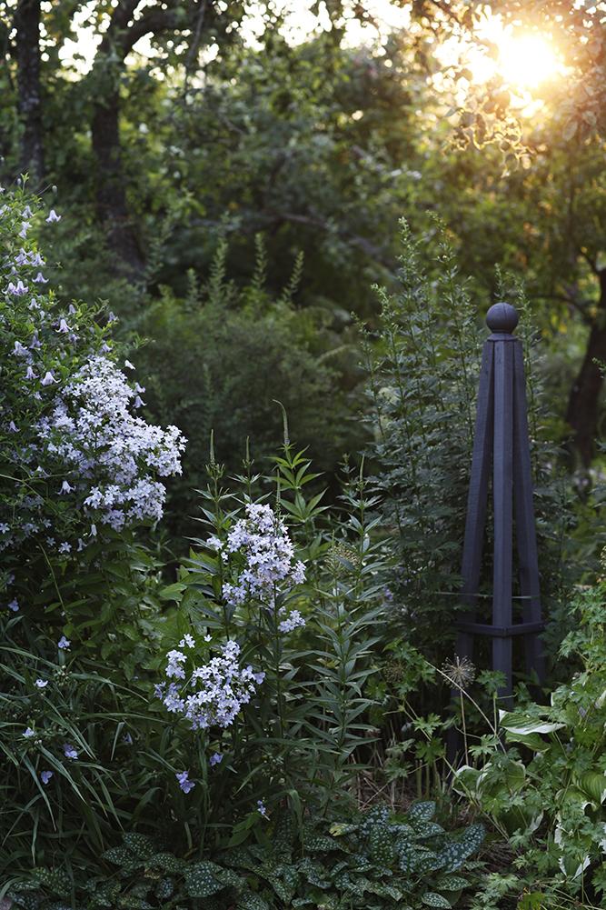 Сад в середине лета и струйный полив 24.jpg