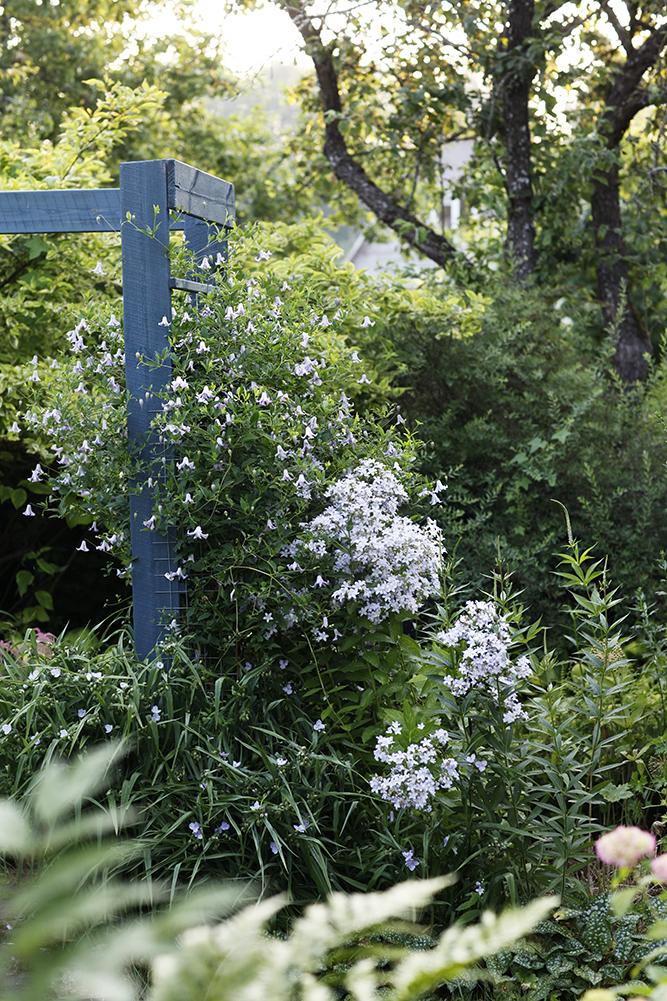 Сад в середине лета и струйный полив 27.jpg