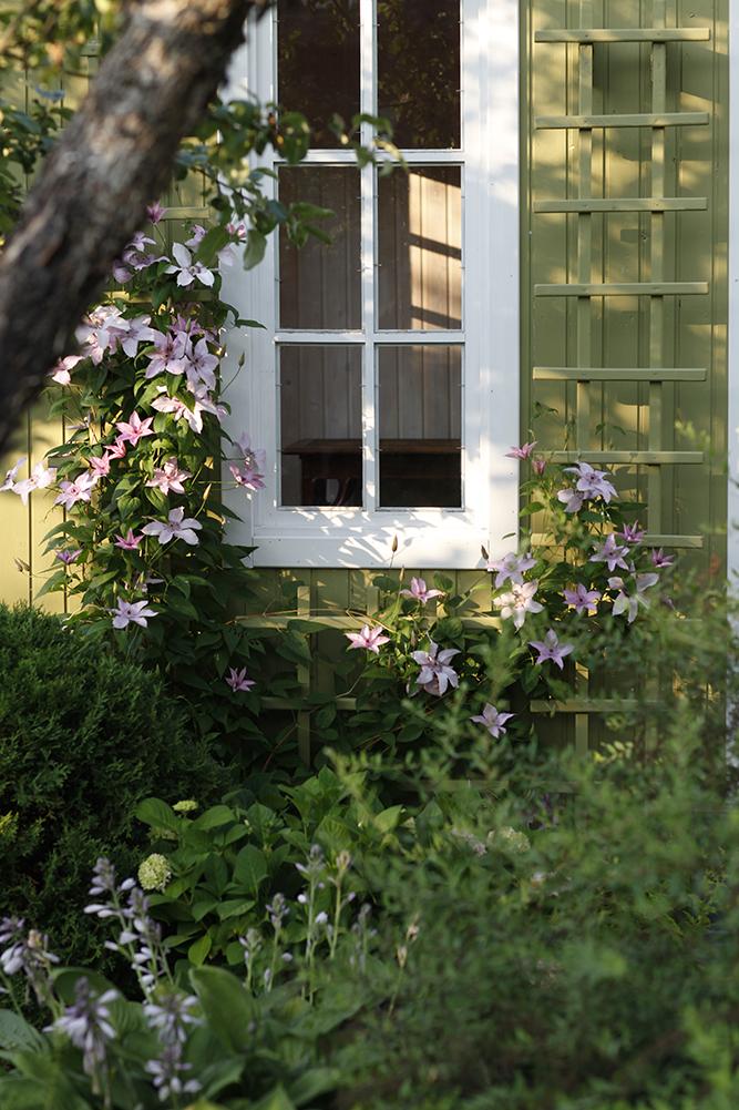 Сад в середине лета и струйный полив 28.jpg