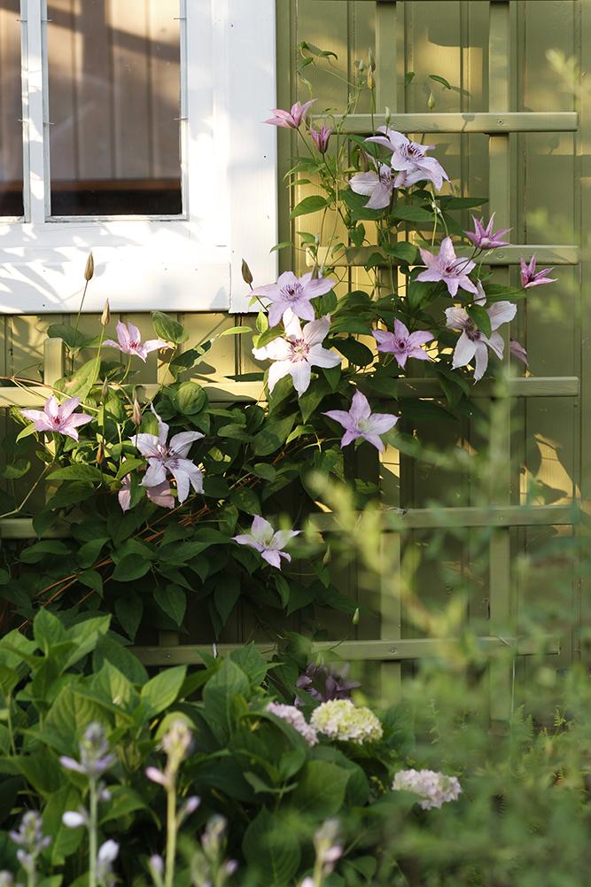 Сад в середине лета и струйный полив 29.jpg