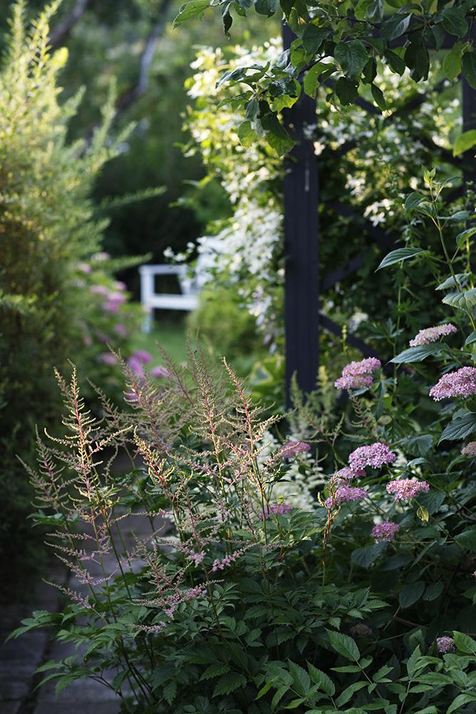 Сад в середине лета и струйный полив 32.jpg