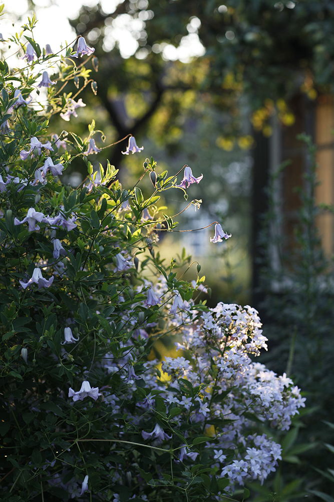 Сад в середине лета и струйный полив 33.jpg