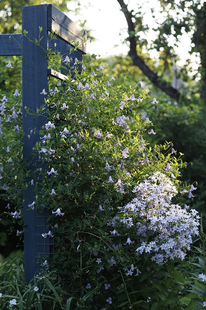 Сад в середине лета и струйный полив 34.jpg