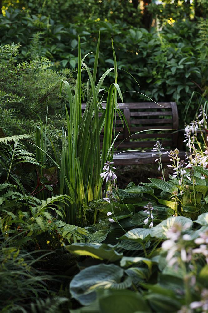 Сад в середине лета и струйный полив 35.jpg