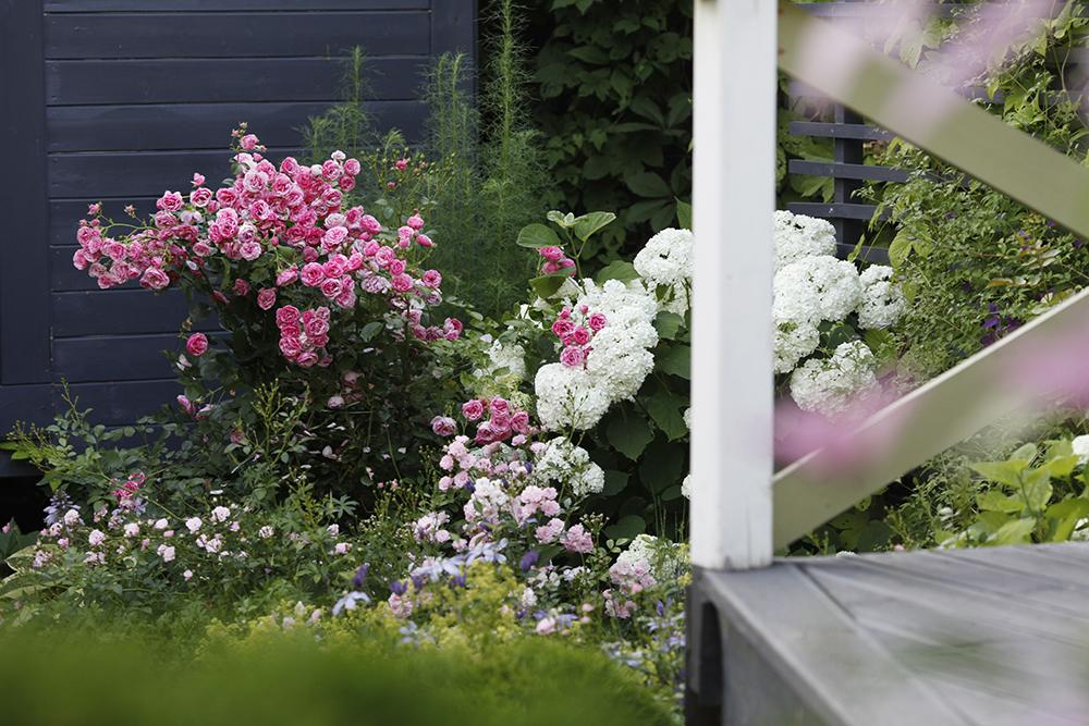 Сад в середине лета и струйный полив 36.jpg