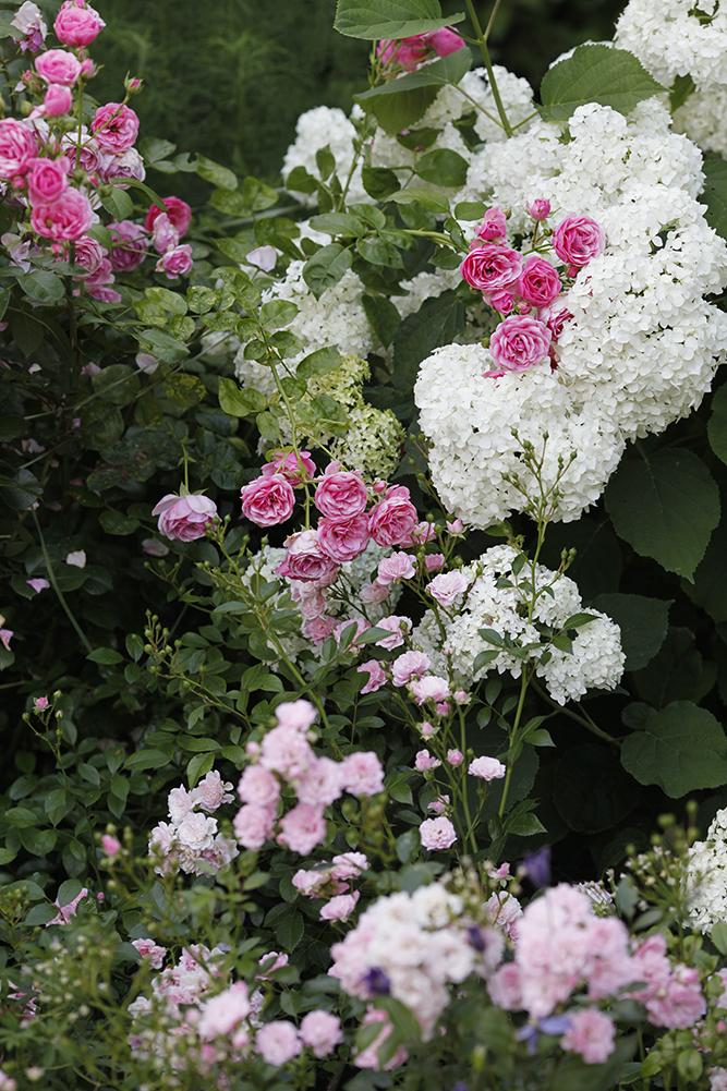 Сад в середине лета и струйный полив 37.jpg