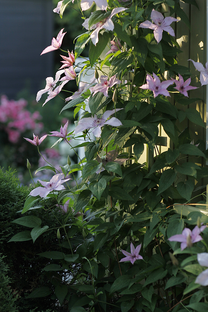 Сад в середине лета и струйный полив 40.jpg