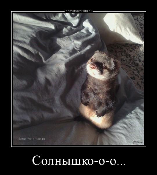dm_temp_image_31703150129547959489