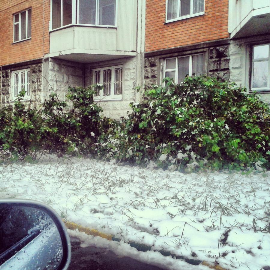 Снег и зелень
