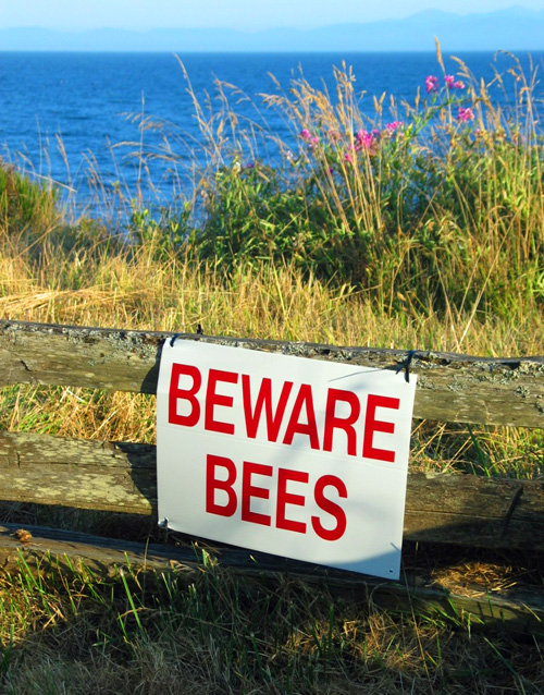 Clifftop sign reading BEWARE BEES