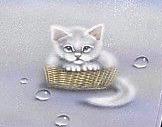 kitty_obi_crop2.png