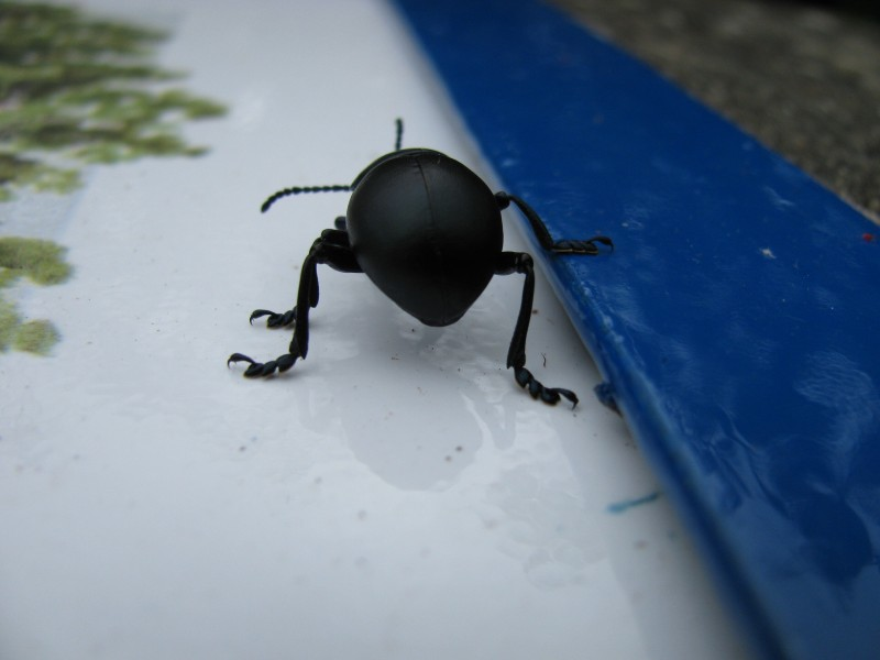 END_beetle_butt.JPG