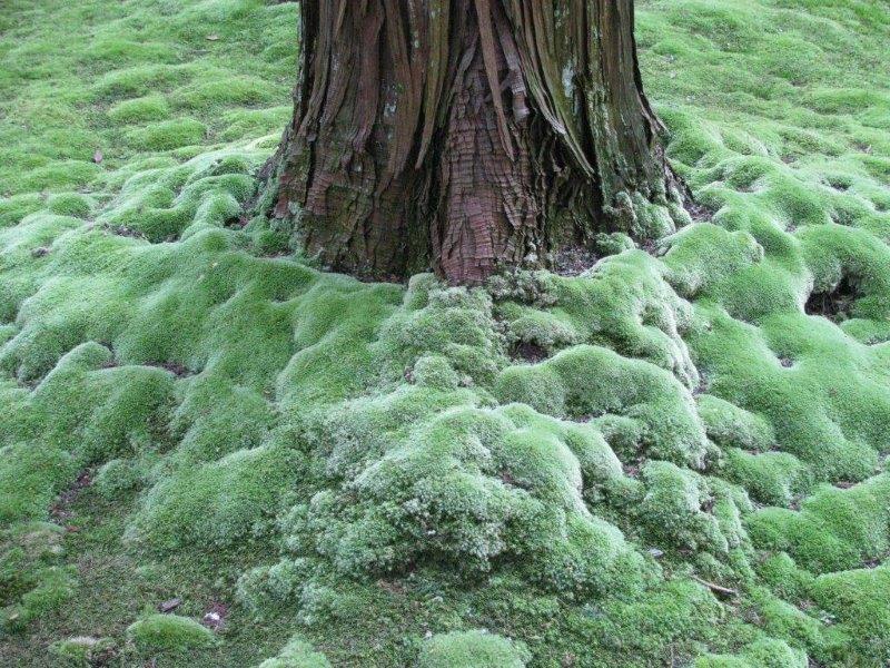 Moss around foot of tree