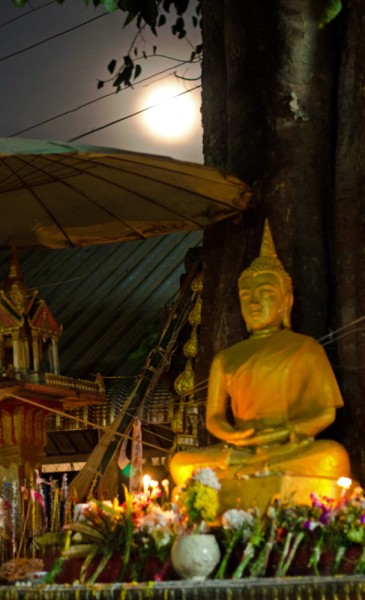 Buddha image in moonlight
