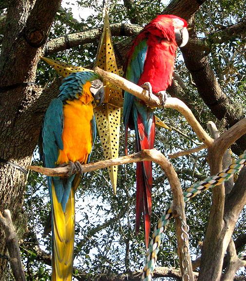 Fla12-Macaws