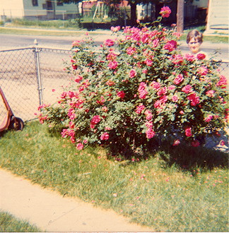 1975-Roses