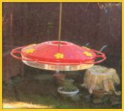 hummingbird feeder 1 (small)