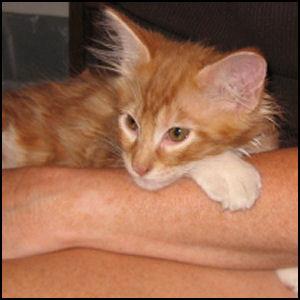 Henry - June 21, 2007 - 5
