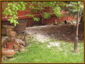 Hail in the back yard