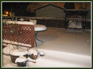 Snow in Portland :: Dec 20, 2008 - back yard