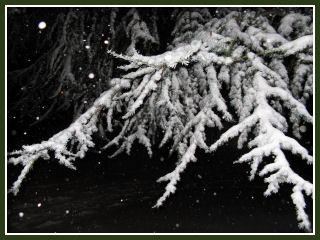 Snow in Portland :: Dec 20, 2008 - front yard