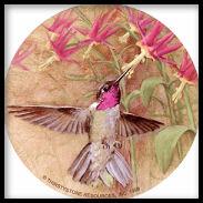Winged Jewel hummingbird coaster