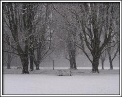 2009 December snow - walk in the park - 4