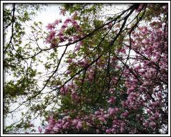 yard - 2010 March 25 - 7